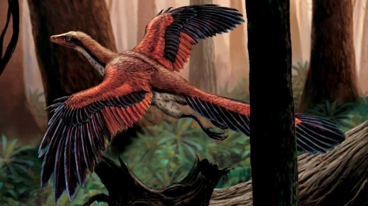 archaeopteryx-flying-trees.adapt.945.1