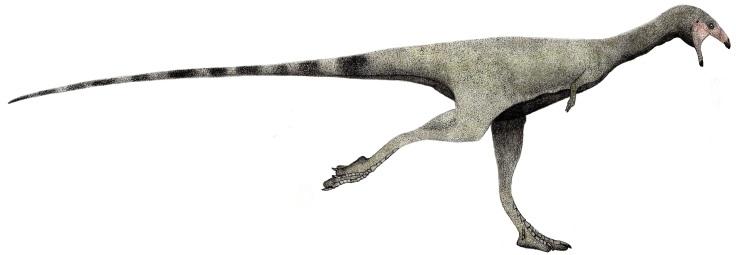 Limusaurus_runner_(flipped)