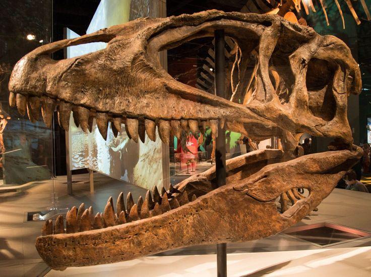 Réplica do crânio do Carcarodontossauro