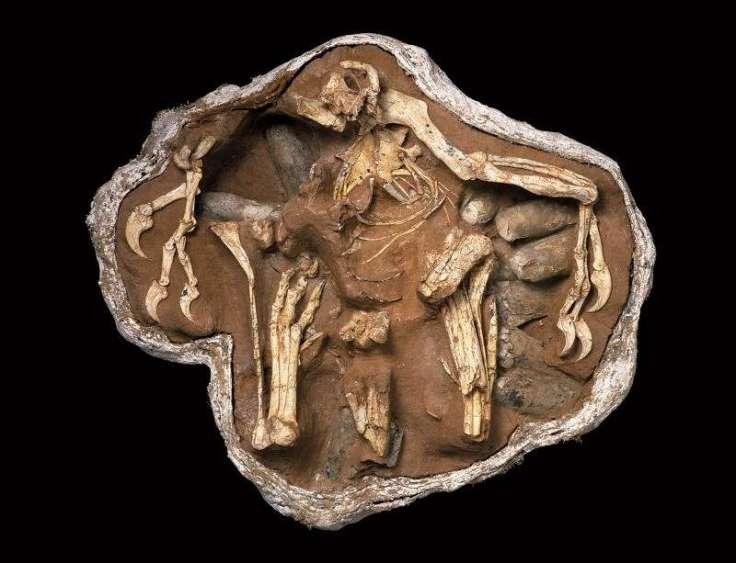 Big mama fossil