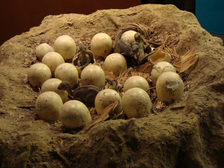 Maiasaura_Nest_Model.001_-_Natural_History_Museum_of_London