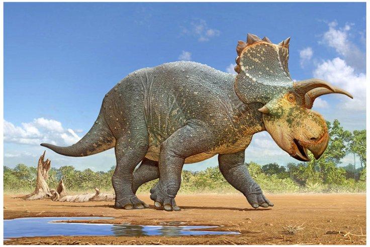Crittendenceratops