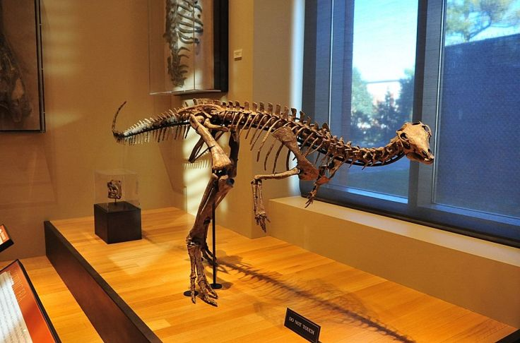 Dryosaurus_altus